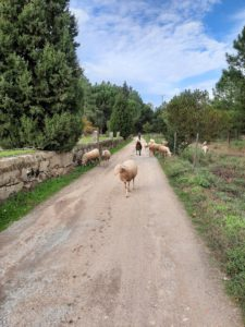 wandelen-currelos-ontmoeting herder