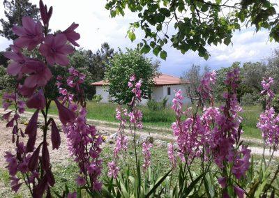 Casa da Mina met roze bloemen