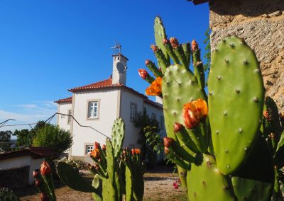 Casa Principal with cactus