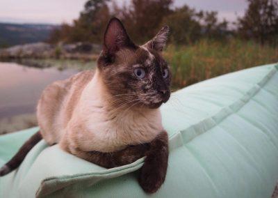Cat Terra from Quinta Vale Porcacho