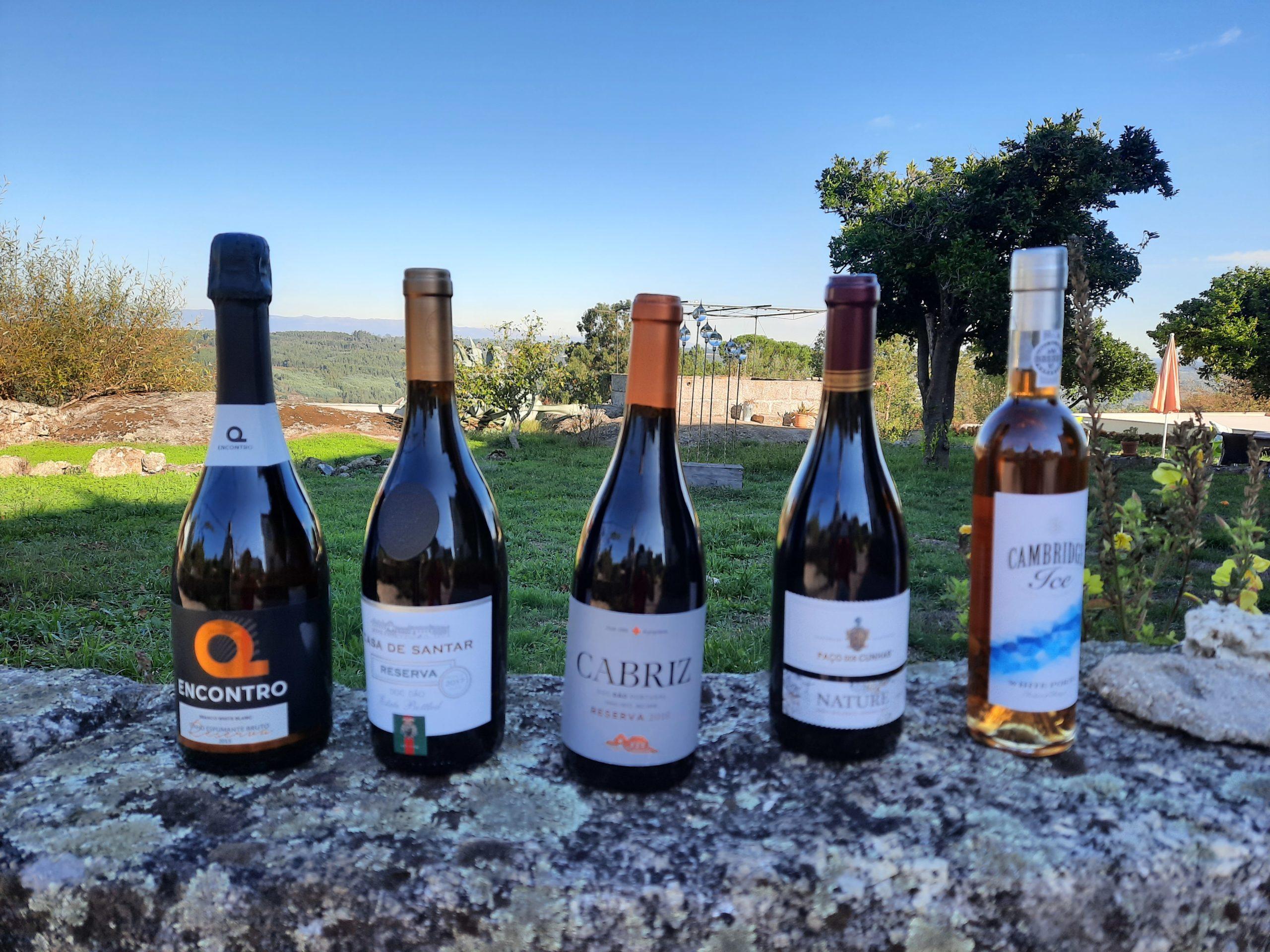 5 garrafas de vinho local